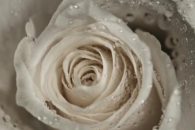 rose hydrosol 2