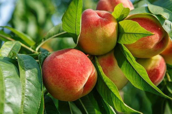 Peach Essential Oil Melange