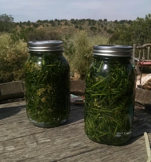 everlasting-maceration-botanical-oil